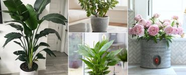 15 Best Vastu Plants For Home Which Brings in Happiness & Wealth