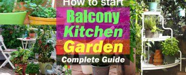 How to Start a Balcony Kitchen Garden